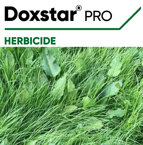 Doxstar Pro Herbicide